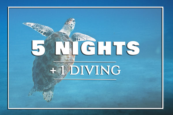 5-nights-diving