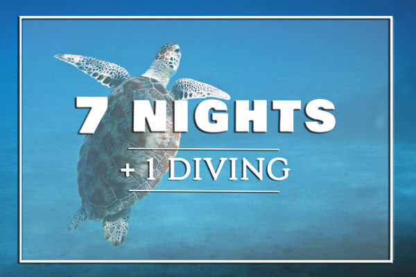 7-nights-diving